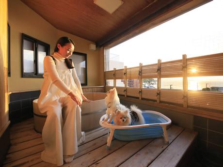 宿 静岡 と 泊まれる ペット